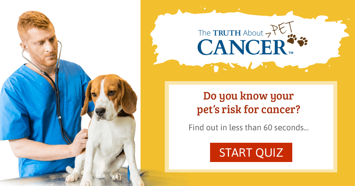 The Truth About Pet Cancer – Quiz